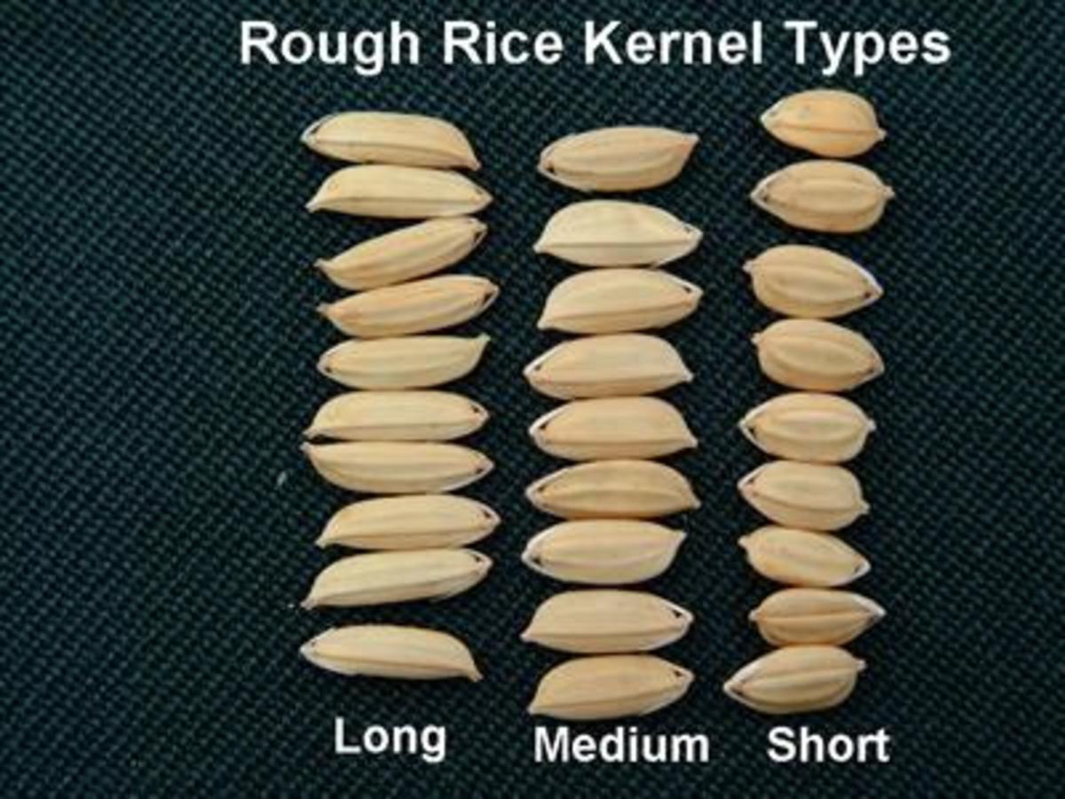 lundberg short grain brown rice cooking instructions