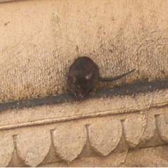 rat trap car instructions