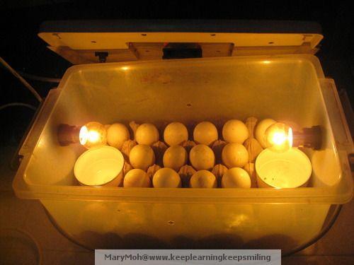 7 egg incubator instructions