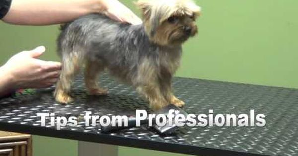 dog grooming instructions do yourself