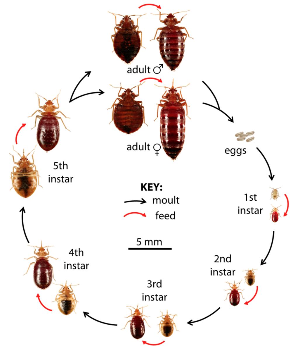 hot shot bedbug and flea spray instructions