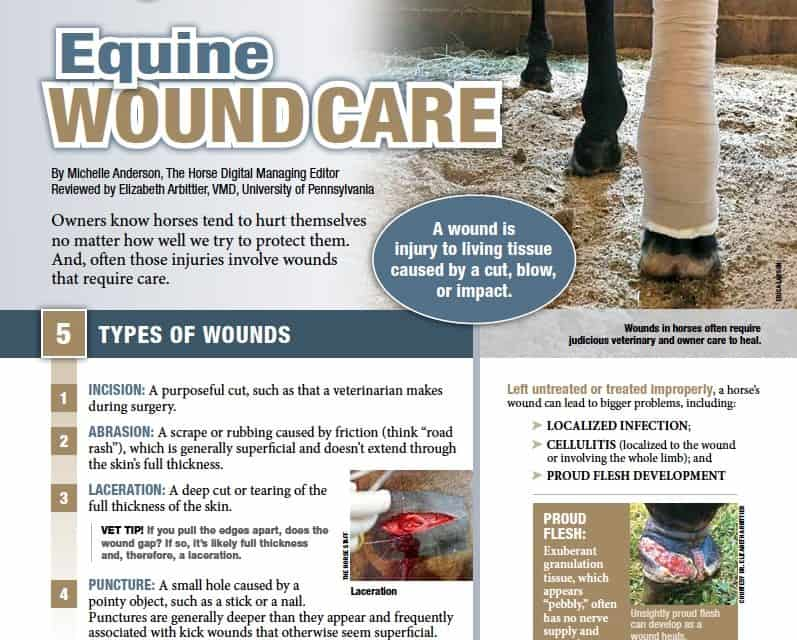 basic wound care instructions