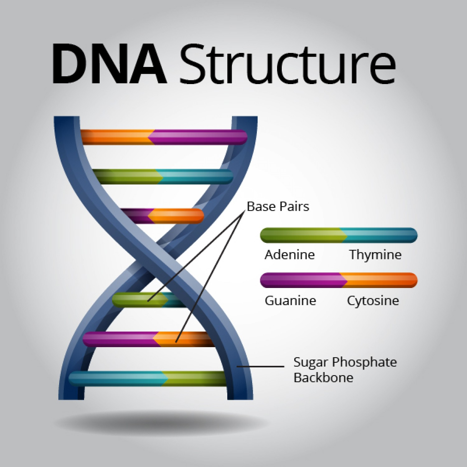 for what molecule do genes contain the instructions for building