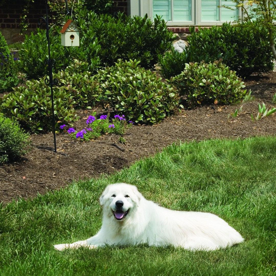 petsafe outdoor bark control instructions