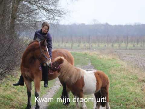 little tikes giddyup n go pony instructions