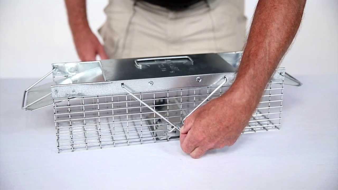 havahart squirrel trap instructions