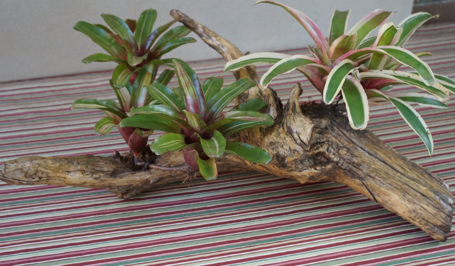 tropical bromeliad care instructions
