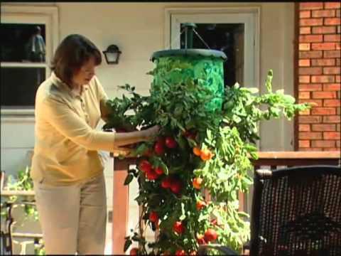 topsy turvy tomato instructions