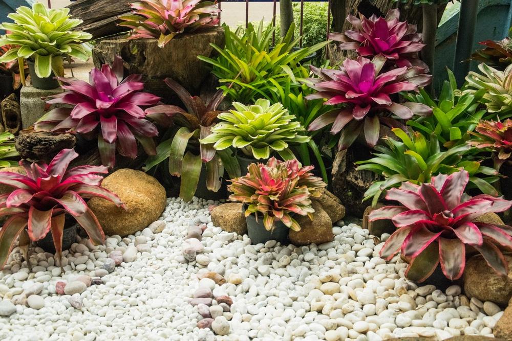 bromeliad plant care instructions