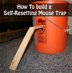 bucket rat trap instructions