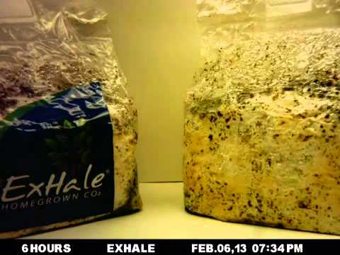 exhale co2 bag instructions