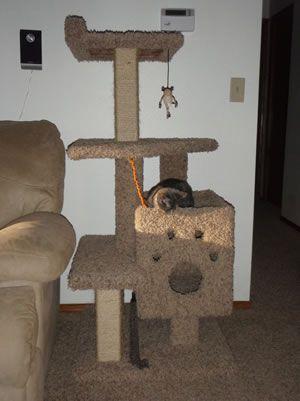 homemade cat tree instructions