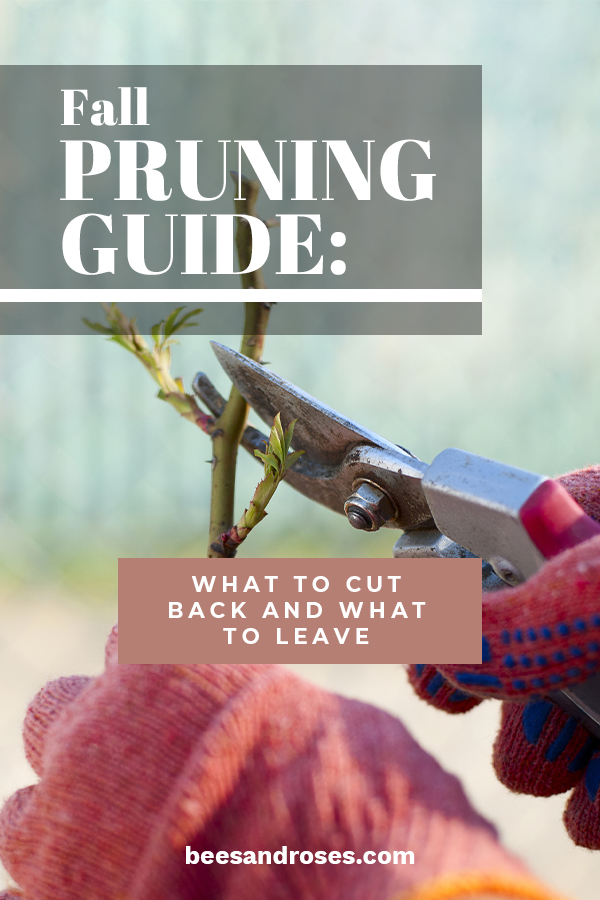 mulberry tree pruning instructions